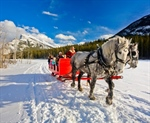 Banff Sleigh Rides Are the Perfect Winter Excursion