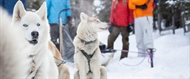 Pawsitivity Thrilling: Dog-Sled Adventures in Banff