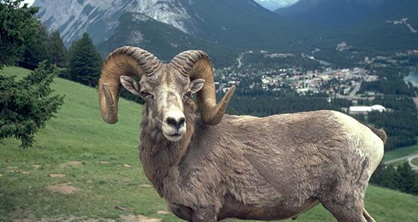 Banff Alberta: Your Summer Paradise