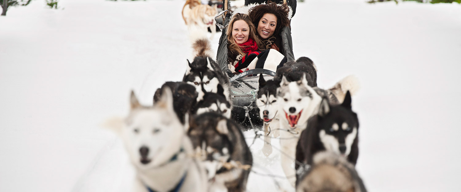 Husky Express Tour Banff